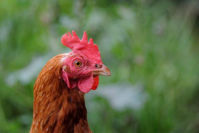 Ciri-Ciri Dari Situs Judi Ayam Yang Aman Seperti S128